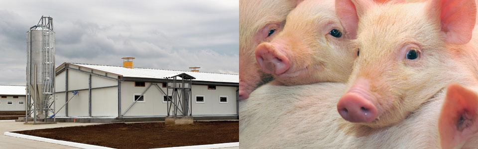 养猪业养牛业