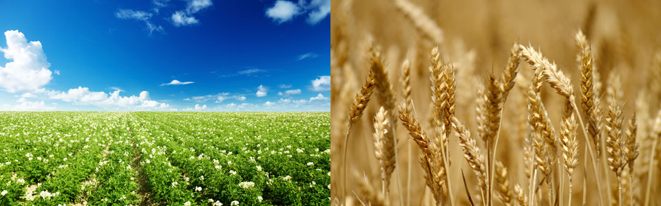 Production Agricole